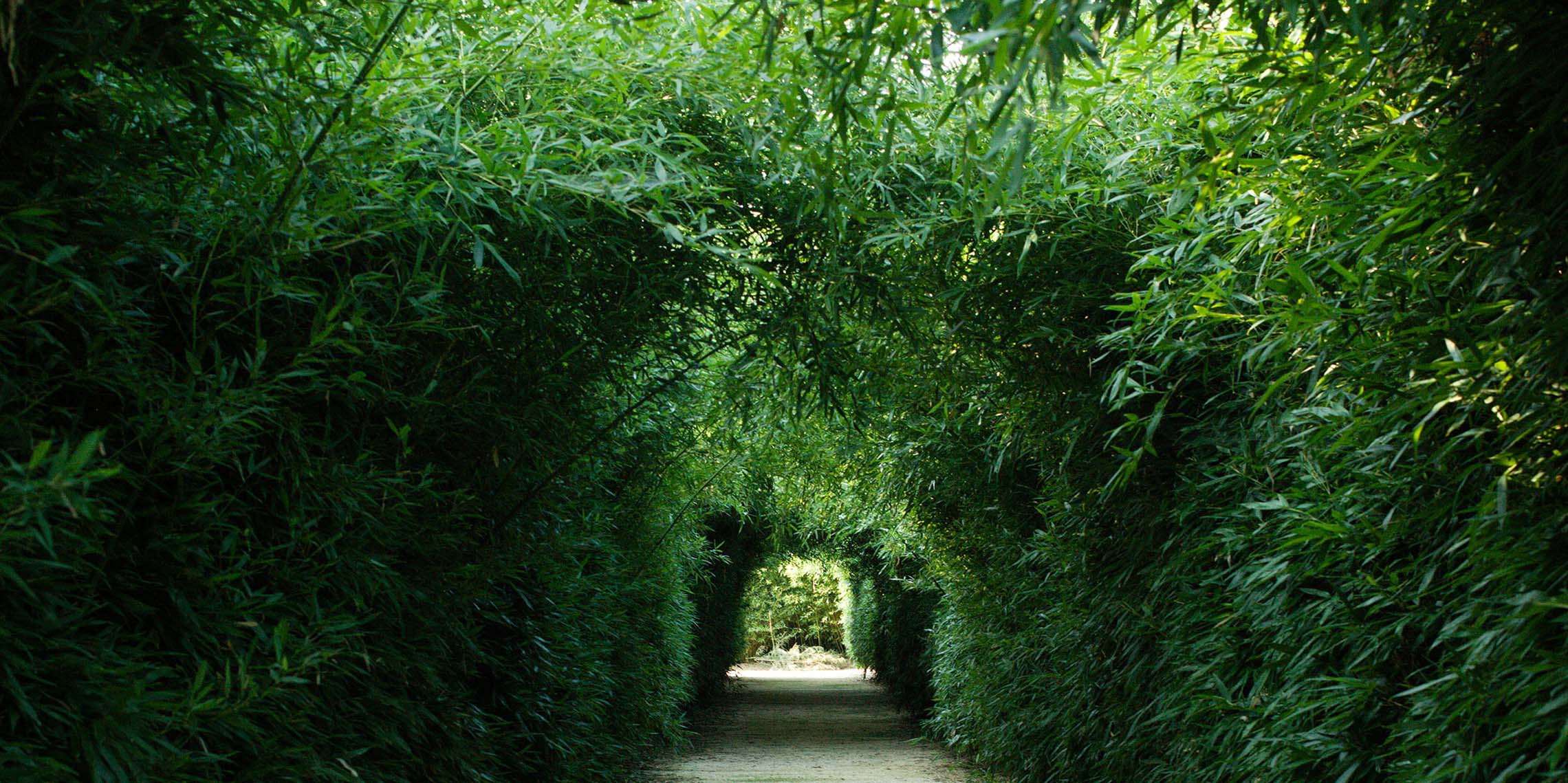 Corridor inside the bamboo labyrinth created by Franco Maria Ricci